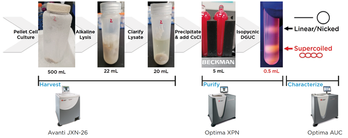 Example Workflow for DGUC Purification of Plasmid DNA