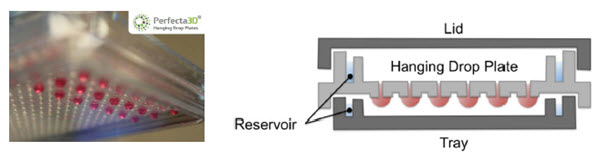 Figure 1. Perfecta3D® Hanging Drop Plate. Droplets hang below the level of the plate to allow cell clustering and spheroid formation while reservoirs reduce evaporation.