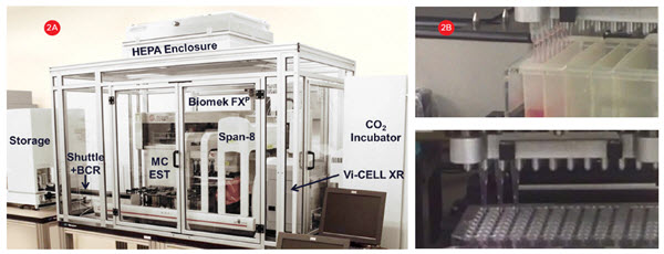 Figure 2. Cell culture system. A) A Biomek FXP Workstation with a 96-channel head and Span-8 pipettors inside a HEPA-filtered enclosure for automating sterile cell manipulations. 3D cultures were grown in HDPs in an integrated incubator for complete workflow automation. B) The 96-channel head utilized enhanced selective tip pipetting which provides additional flexibility by enabling any pattern of tips to be used.