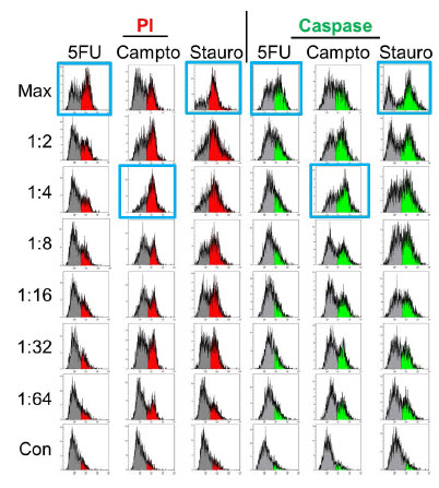 Figure 6. Apoptosis Analysis – Flow Cytometry. Spheroids treated identically as in Figure 5 were dissociated and stained for apoptosis markers and analyzed by flow cytometry. Maximal responses (blue boxes) correlate with imaging results for staurosporine and camptothecin but 5-fluorouracil treatment shows significant positive staining (>50% at maximal concentration).