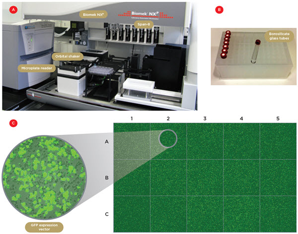 Figure 1. Robotic system and automated transfection. A) One of the two Biomek NXP workstations with a Span-8 pipettor, an orbital shaker and a microplate reader. B) The borosilicate glass tubes used to contain the lipophilic transfection reagent. C) Confocal tiled images of 15 individual wells of a 96-wellplate containing S2 cells transfected with a GFP expression vector. The transfection efficiency was 50-60% and the well-to-well variability below 20%.