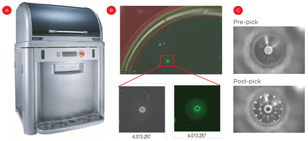 Figure 3. Enrichment of secreting cells. The ClonePix 2 (A) uses imaging to identify clones in semi-solid media based on size (cell growth) and external fluorescence (antibody secretion, B). C) Optimal clones are then picked from the semi-solid media and transferred to 96- well plates for suspension culture.
