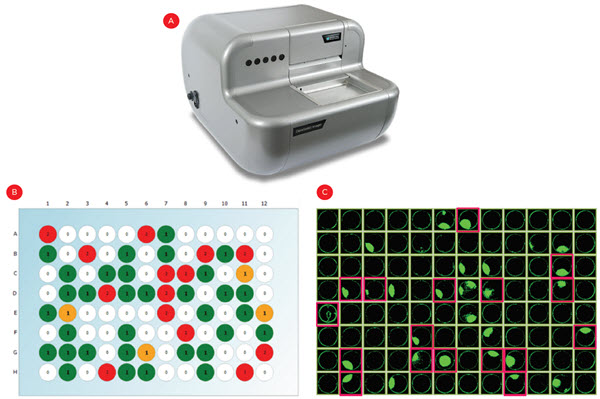 Figure 4. Identifying single cell-derived colonies. Following limiting dilution cell plating, the CloneSelect imager (A) was used to count fluorescently-stained cells in each well to identify monoclonal wells (B, green wells). (C) Cell confluence was also measured over three weeks to identify the monoclonal wells that grew into colonies and warrant testing for IgG expression (pink highlights).