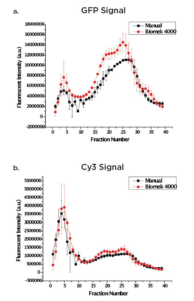 Fig. 2a y 2b. Imágenes superpuestas de diferentes técnicas de preparación para eGFP-gp16 (a) y cy3-ADNbc (b).