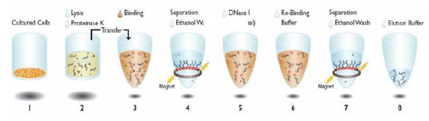 Figure 1. Beckman Coulter Agencourt® RNAdvance Cell V2 Kit protocol
