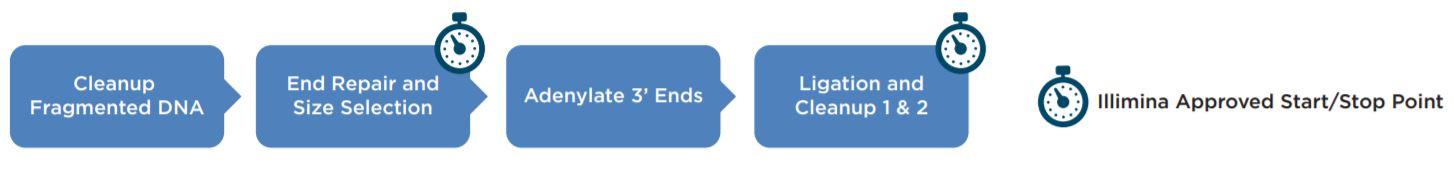 Figure 1. llumina TruSeq® DNA PCR-Free workflow
