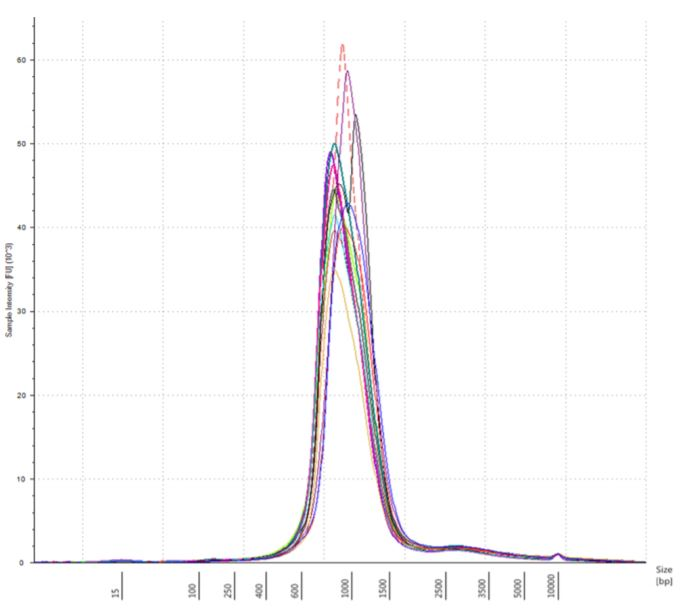 Figure 7. Electropherogram (Sample intensity vs. size in base pairs) of Agilent TapeStation corresponding to UHR250 replicate3 showing the libraries around expected size of the marker