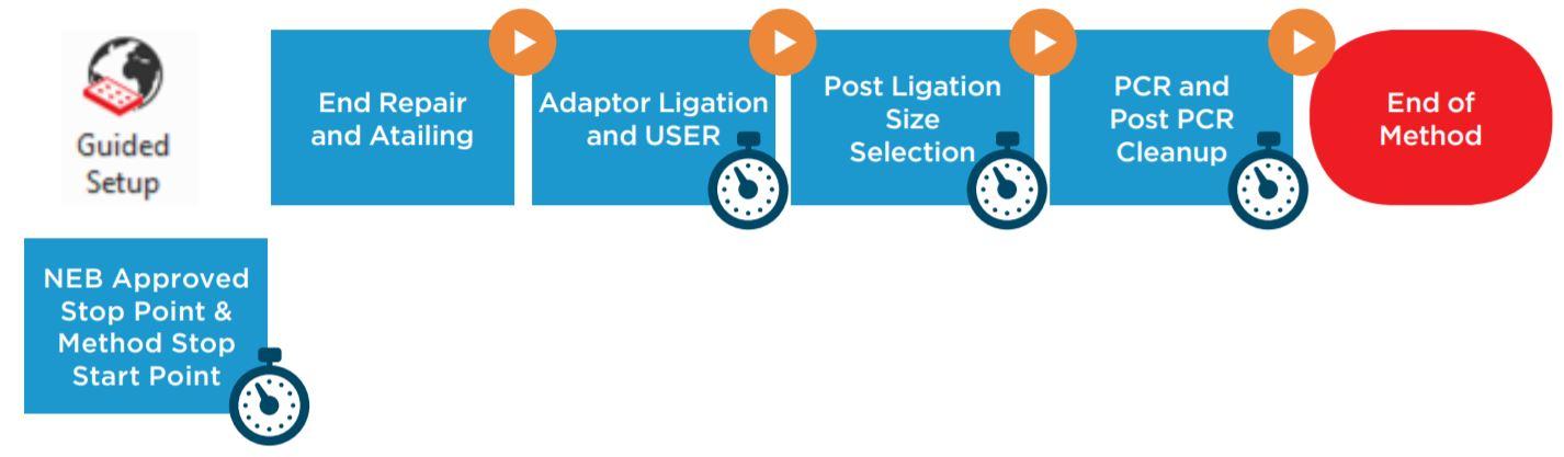 Figure 1. NEBNext® Ultra IITM DNA Library Prep Kit protocol
