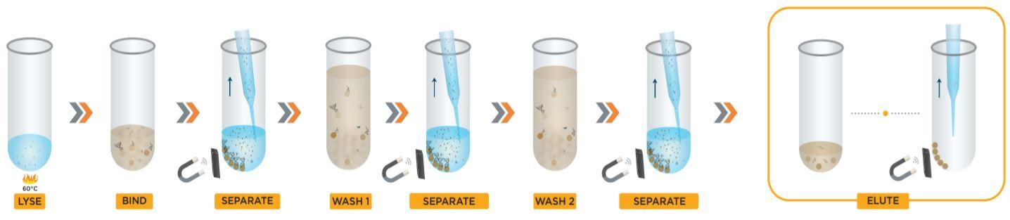Figure 2. Apostle MiniMax™ High Efficiency cfDNA Isolation kit protocol