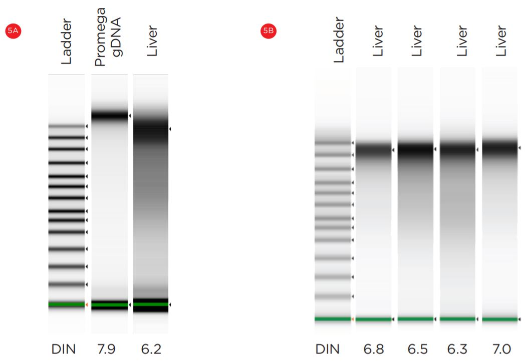 Figure 5. Manual (A) and automated (B) mouse DNA samples were analyzed on Agilent Bioanalyzer 2100.