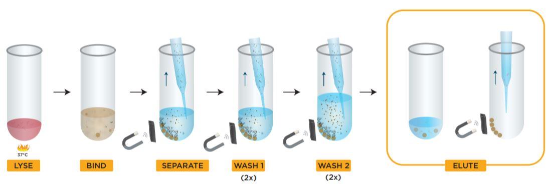 Figure 2. Beckman Coulter GenFind V3 kit protocol