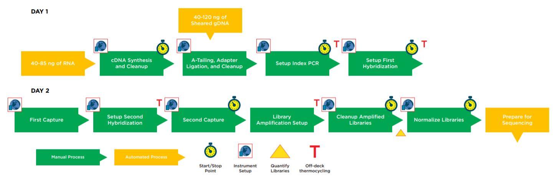 Figure 1. Illumina TruSight Tumor 170 32 Sample Method Workflow.