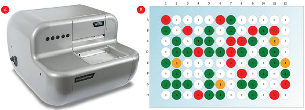 Figure 3. Monoclonality confirmation. A) A CloneSelect Imager was used to count fluorescent cells. B) A representative plate indicating empty wells (white), monoclonal wells (green/yellow) or wells with multiple cells (red). Yellow wells indicate confirmation is required due to faint signal or abnormal shapes which can indicate cell clusters.