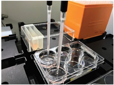 Figure 2. Semi-solid medium automation. The Span-8 pipettors of the Biomek i7 Workstation were used to add cells to medium, mix the cells in the reservoir, and dispense 3mL to 6-well plates.