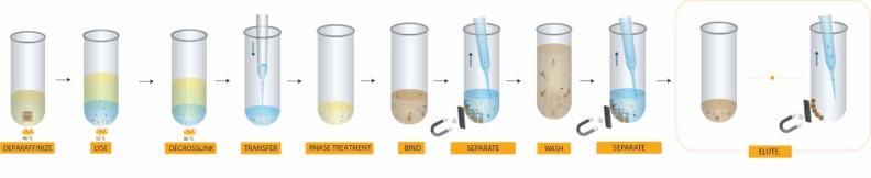 FormaPure XL DNA workflow