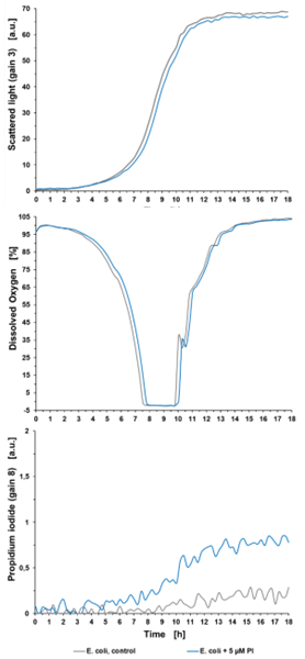 Figure 2: Pre cultivation experiment showing the impact of 5 µM PI on bacterial growth, DO and the PI signal of a bacterial cultivation in the BioLector® Pro