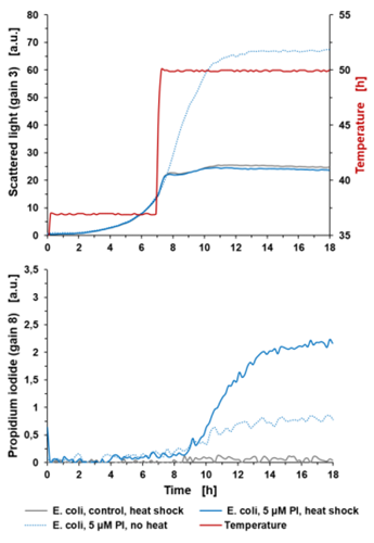 Figure 4: Determination of cell lysis in the BioLector® Pro using PI staining.