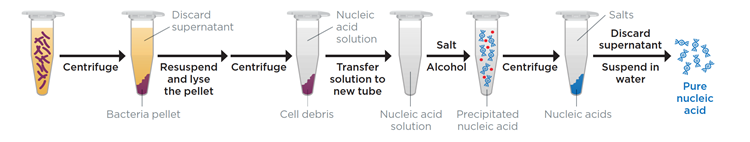 Figure 1: Schematic overview of an isopropanol precipitation of nucleic acids