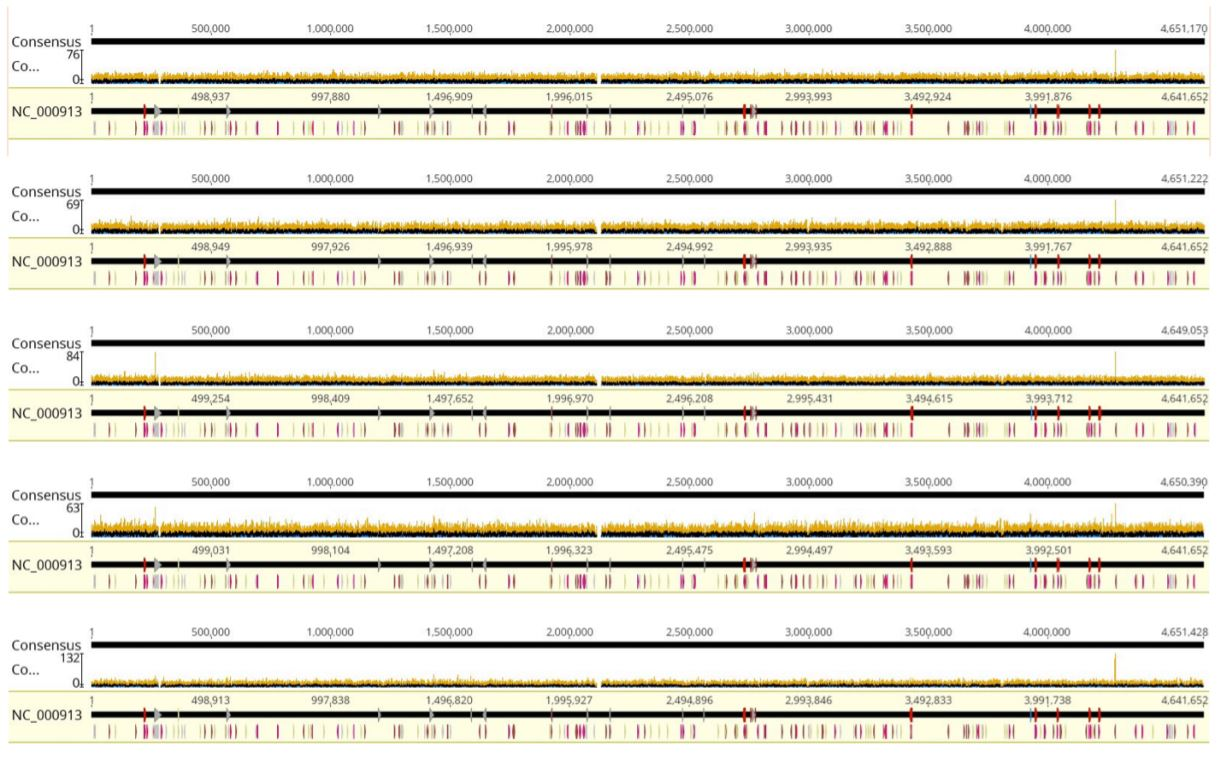 FIGURE 4: Coverage graphs from Geneious alignments. From top to bottom: Tag25/PCR25, Tag25/PCR2.5, Tag12.5/ PCR6.25, Tag6.25/PCR6.25, and Tag1.25/PCR2.5. Coverage is highly equivalent regardless of reaction volumes used. E.coli K-12 gDNA from ATCC was aligned to E.coli K-12 MG1655 reference genome from NCBI.