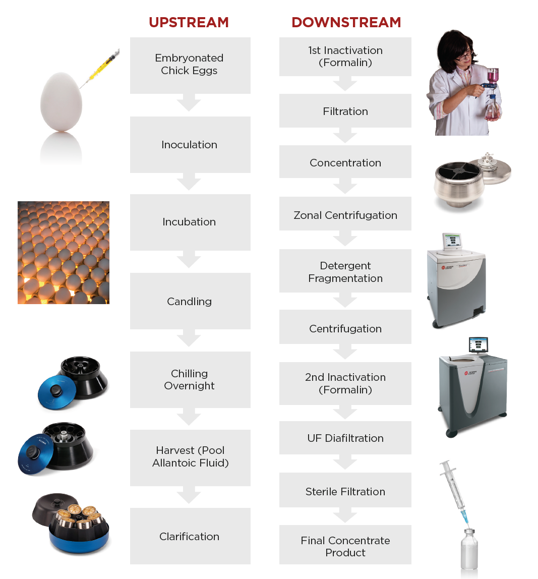 Fig. 1. Typical workflow for egg-based influenza vaccine manufacturing.1