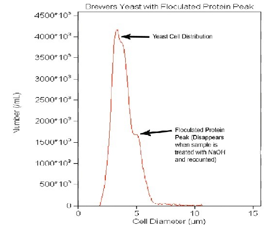 A yeast sample with a bi-modal peak. The first peak is yeast, while the second peak is that of flocculated protein. The secondary peak can be larger than the yeast cell peak