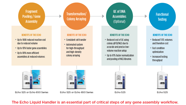 Gene Synthesis Workflow
