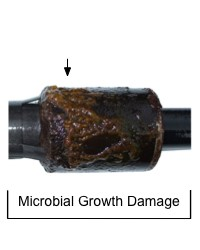 Microbial growth damage from contaminated oil