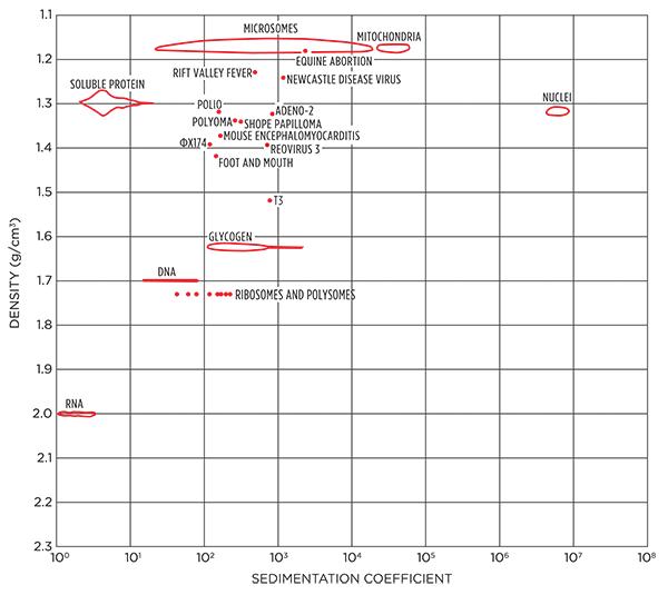 Fig. 2. Densidades de orgánulos de virus/células y valores S 1