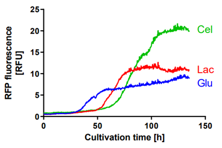 Figure 3:RFP fluorescence profiles of T. reesei RUT-C30 RFP1 during cultivation on different carbon sources