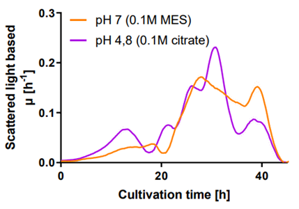 Figure 5: Comparison of growth rates of T. reesei RUT-C30 RFP1 at pH7 (0,1 M MES buffer) and pH 4,8 (0,1 M citrate buffer).