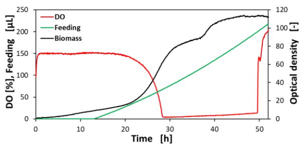 Figure 11 Fed-batch cultivation of C. glutamicum in the optimized CGXII medium with a linear feed rate of 5.45 µL/h + 0,1 µL/h in the BioLector® Pro
