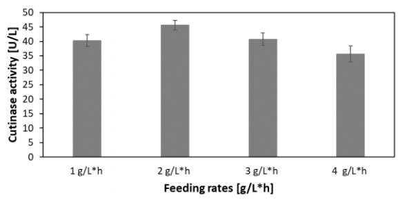Figure 12 Comparison of the cutinase activities of C. glutamicum at different linear feed rates with an increase of 0.1 µL/h