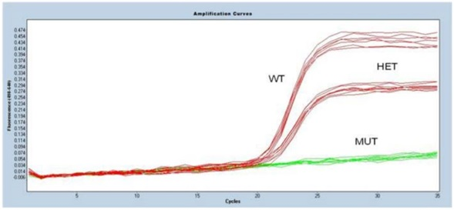 Figure 1 Quantification of wildtype heterozygote