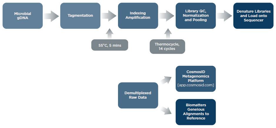Nextera Library Prep Workflow