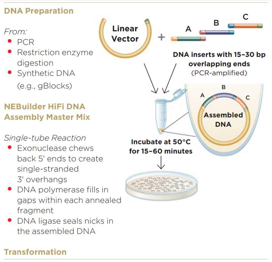 Modular DNA Assembly of PIK3CA Using Acoustic Liquid Transfer in Nanoliter Volumes fig1
