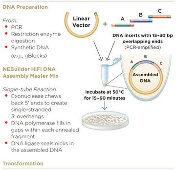 Modular DNA Assembly of PIK3CA Using Acoustic Liquid Transfer in Nanoliter Volumes fig1