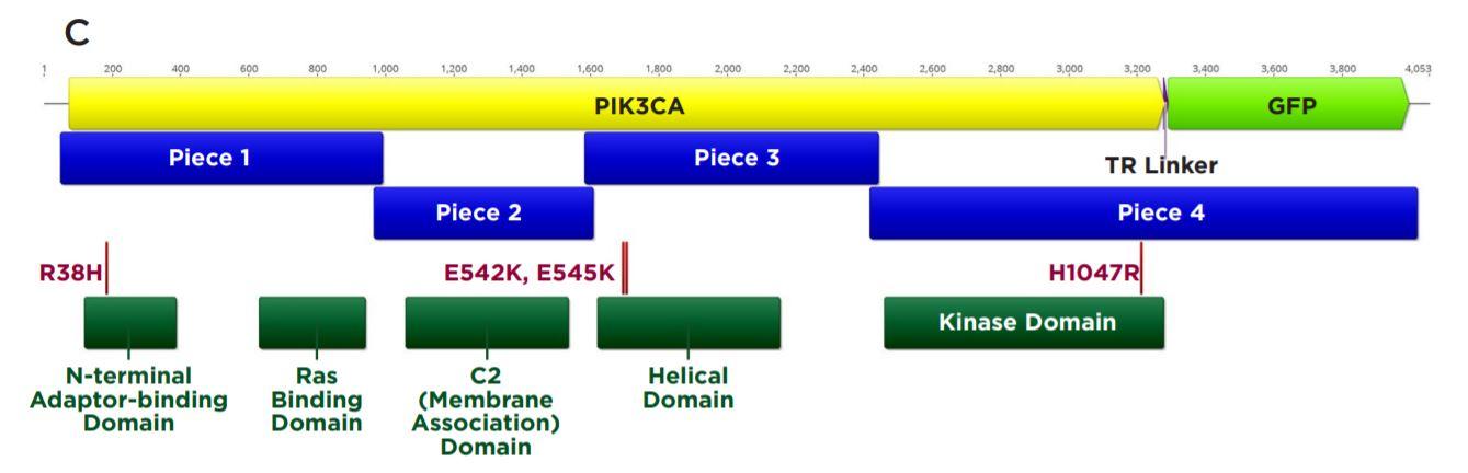 Modular DNA Assembly of PIK3CA Using Acoustic Liquid Transfer in Nanoliter Volumes fig2c