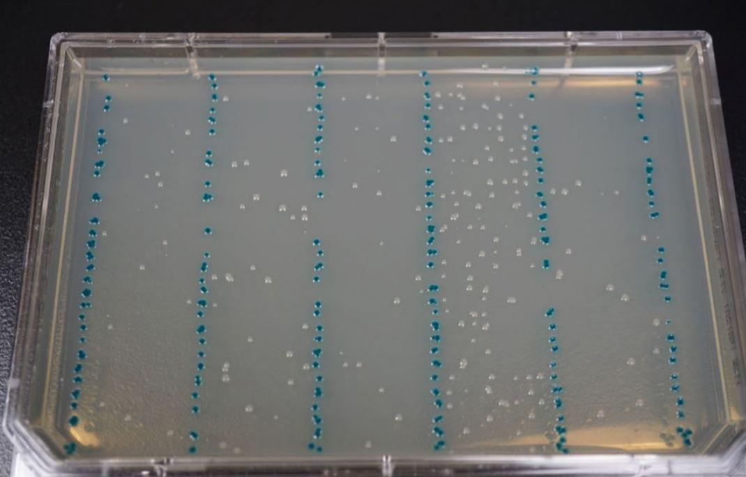 fig4 Modular DNA Assembly of PIK3CA Using Acoustic Liquid Transfer in Nanoliter Volumes