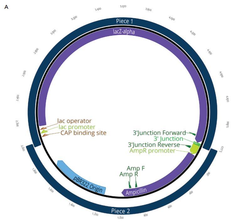 Fig2 Nanoliter Scale DNA Assembly Utilizing the NEBuilder HiFi Cloning Kit with the Echo 525 Liquid Handler