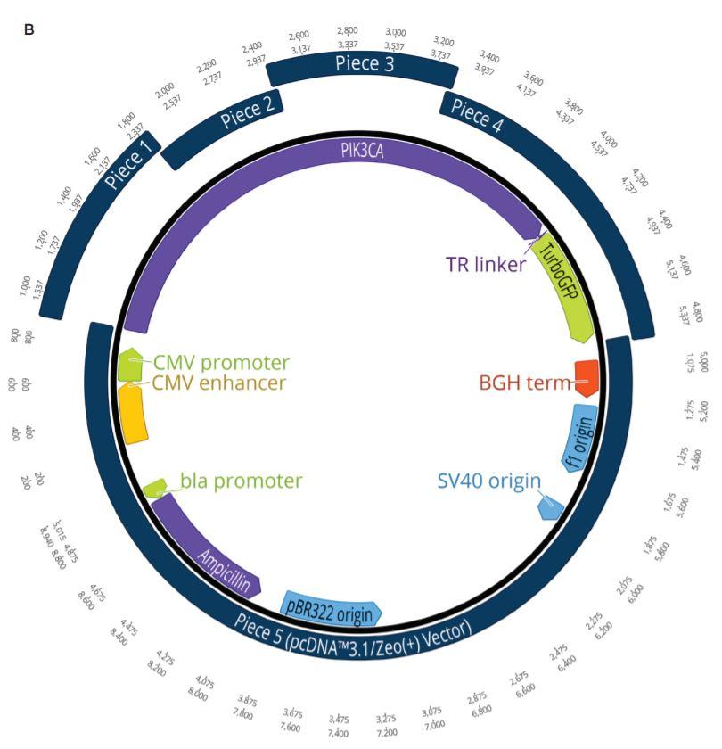 fig2b Nanoliter Scale DNA Assembly Utilizing the NEBuilder HiFi Cloning Kit with the Echo 525 Liquid Handler