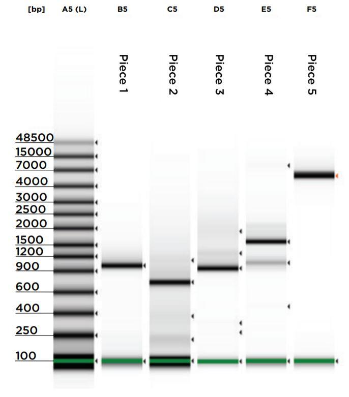 fig5 Nanoliter Scale DNA Assembly Utilizing the NEBuilder HiFi Cloning Kit with the Echo 525 Liquid Handler