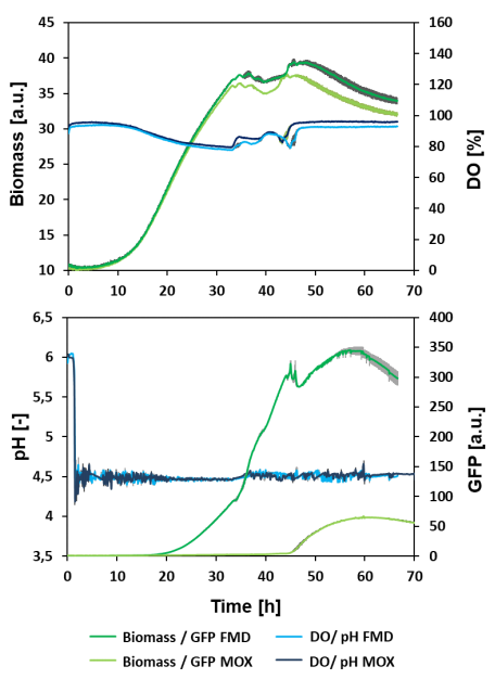 Figure 5: Comparison between microfluidic batch cultivations of H. polymorpha RB11 FMD-GFP and H. polymorpha RB11 MOX-GFP. Biological triplicates were cultivated at 1200 rpm and a two-sided pH control. The mean values(blue line) with the standard deviation (grey area) were plotted against the cultivation time