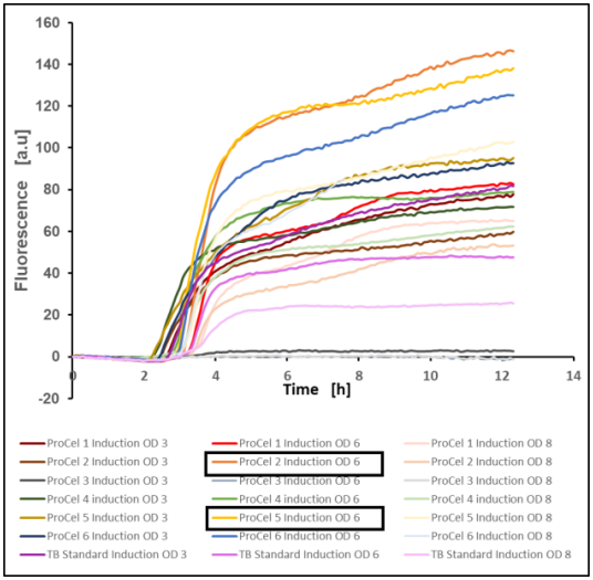 Figure 10: GFP production of E. coli BL21(DE3) pET-28a(+) EcFbFP in different TB media after induction at optical densities of 3, 6 and 8, mean value of two biological replicates, 37 °C, 1400 rpm, 35 % oxygen in headspace, 800 µL filling volume