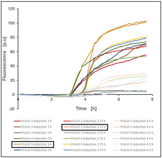 Figure 8: EcFbFP production of E. coli BL21(DE3) pET-28a(+) EcFbFP in different TB media after induction at fixed time points, mean value of two biological replicates, 37 °C, 1400 rpm, 35 % oxygen in headspace, 800 µL filling volume