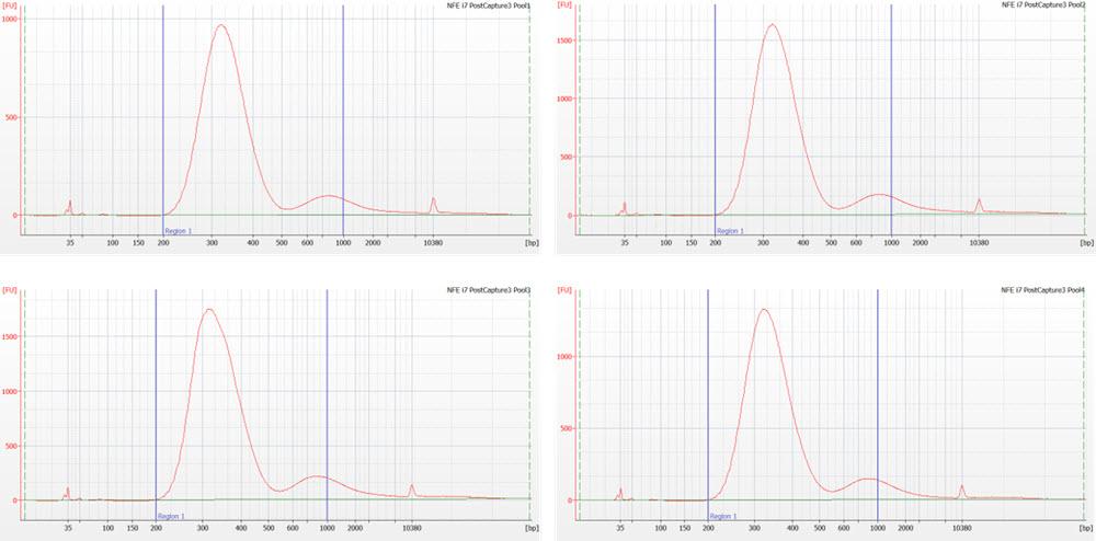 Figure 7. Nextera Flex for Enrichment library pools following target enrichment assayed on the Agilent 2100 Bioanalyzer using a DNA High Sensitivity chip.