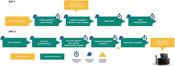 Figure 2. Illumina TruSight Oncology 500 automated method workflow