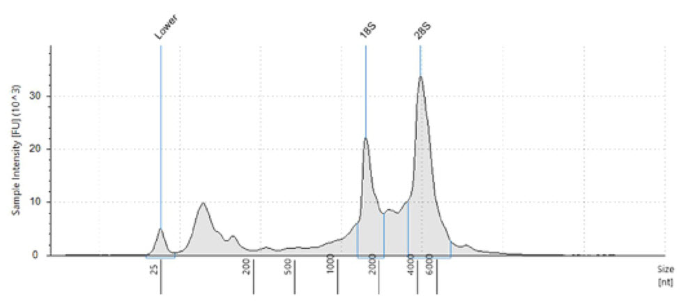 Figure 1. Electropherogram of the human brain total RNA used as input. Fragment analysis was run on Agilent TapeStation 2200 with the RNA kit. RIN is 8.6, demonstrating intact and quality input material.