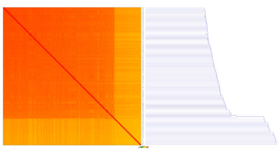 Figure 10. A Sample Correlation Matrix, showing a heatmap with the relative similarity between all replicates in this analysis. Each row and column represents one replicate, ordered by similarity (hierarchical clustering). The color of each field indicates the Spearman Rho correlation between these replicates. Dark orange is a correlation of 1 and lightening up to green and white indicates a correlation of -1.