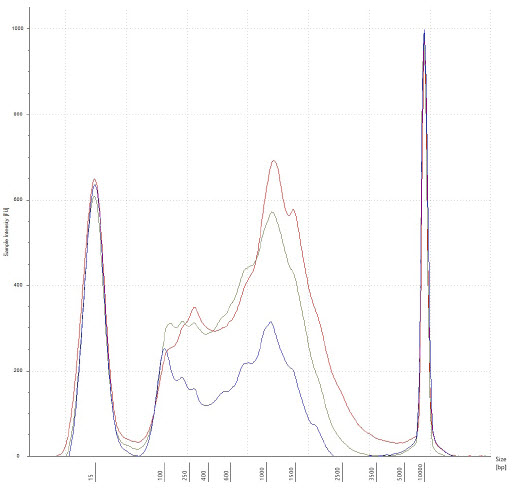 Figure 3. Electropherogram of a few cDNA samples, after 18x cycling of second strand cDNA synthesis, and SPRI bead cleanup. Traces represent 10pg, 100pg, and 1000pg input in blue, yellow, and red, respectively. There is intact cDNA in all three examples, with the median of transcripts occurring approximately 1500bp in length.