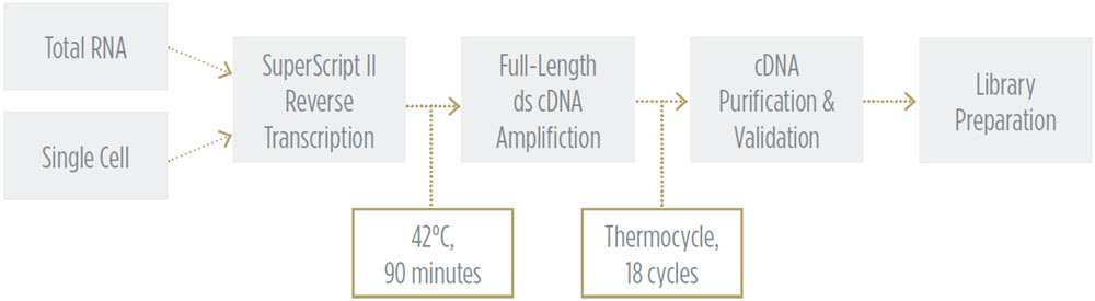 SMART-Seq v2 Workflow to Generate cDNA Libraries